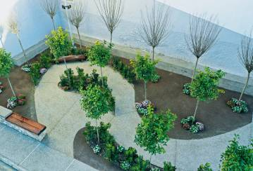 Holcim's nature-based solutions make cities greener