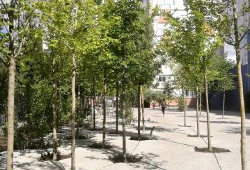 Building an urban forest in France