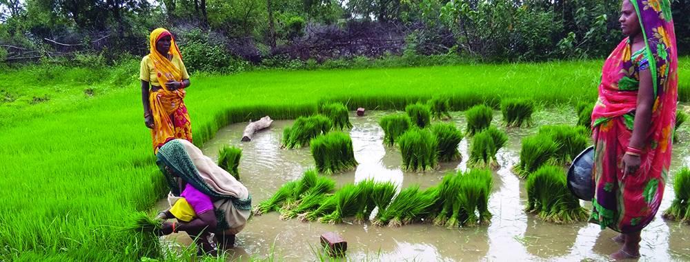 paddy seedling nursery kymore